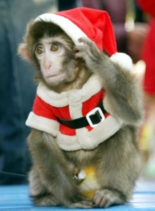 209312-monkey-dressed-in-santa-claus-outfit