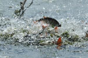 Вниманию рыболовов!
