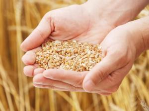 Результаты и планы матеевичских аграриев