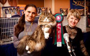 Четыре лапы и хвост: пять актуальных вопросов о кошках